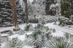 Snowy landscape of the park Arboretum. Sochi, Russia. Arboretum in Sochi - is a treasure trove of Russian subtropics, numbering more than 2000 exotic and rare Royalty Free Stock Photos