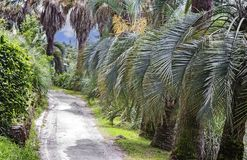 Arboretum of tropical and subtropical plants. Part of the arboretum with many beautiful tropical plants along the tracks. Palm alley Stock Photo