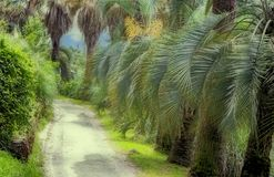 Arboretum of tropical and subtropical plants. Part of the arboretum with many beautiful tropical plants along the tracks. Palm alley Stock Photos