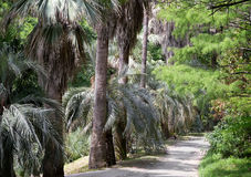 Arboretum of tropical and subtropical plants. Royalty Free Stock Photo