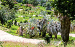 Arboretum of tropical and subtropical plants. Royalty Free Stock Photos