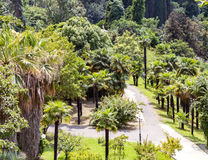 Arboretum of tropical and subtropical plants. Stock Photo