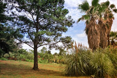 Arboretum of tropical trees and plants. In the arboretum on the hillside, palm trees, pine trees and other subtropical plants on a clear Sunny day. The Black Royalty Free Stock Image