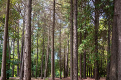 Arboretum of various species of coniferous and deciduous trees. Royalty Free Stock Image
