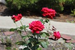 Arboretumbloemen Stock Foto's
