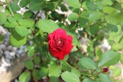 Arboretumbloemen Royalty-vrije Stock Foto's