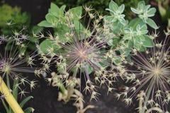 Arboretumbloemen Royalty-vrije Stock Foto
