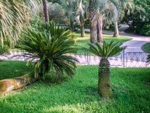 Arboretumen parkerar i Sochi Royaltyfri Fotografi