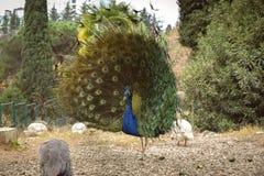 Arboretumpark het Arboretum van 'Dendrarium 'van het stadspark van Sotchi, Rusland nave vogel royalty-vrije stock foto