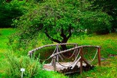 Arboretumu Ataturk Στοκ Εικόνα