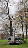 Arboriculturist pruning a tree. A man standing in an aerial lift place on a grey truck, pruning tree branches in a park Royalty Free Stock Image