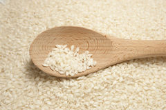 Arborio Rice with Spoon. In Horizontal Orientation Stock Photos