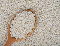 Arborio rice. Uncooked Arborio rice close up Stock Image