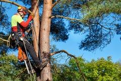 Arborist на работе Стоковые Фотографии RF