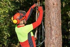 Arborist на работе Стоковые Изображения