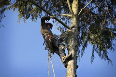 Arborist cutting tree. An arborist cutting a tree with a chainsaw Stock Photography