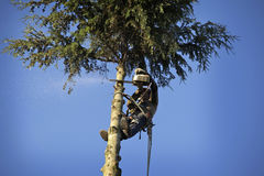 Arborist cutting tree. An arborist cutting a tree with a chainsaw Royalty Free Stock Photos