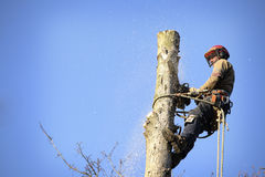 Arborist cutting tree Royalty Free Stock Photos