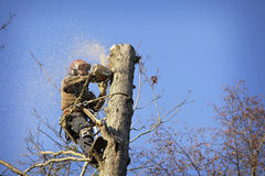 Arborist cutting tree Royalty Free Stock Images