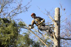 Arborist cutting tree. An arborist cutting a tree with a chainsaw Royalty Free Stock Images