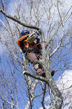 Arborist cutting tree Royalty Free Stock Photos