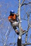Arborist cutting tree Stock Photography