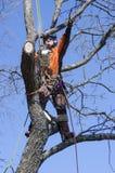 Arborist cutting tree Royalty Free Stock Photo
