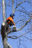 Arborist cutting tree Royalty Free Stock Photography