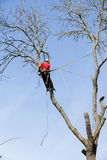 An arborist cutting a tree Royalty Free Stock Image