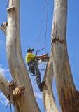 Arborist die op het werk grote boom 2 felling Royalty-vrije Stock Afbeelding