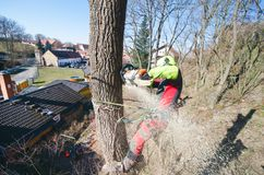 Arborist man cutting a branches with chainsaw and throw on a ground. The worker with helmet working at height on the trees. Lumber. Jack working with chainsaw Stock Photography