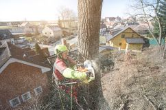 Arborist man cutting a branches with chainsaw and throw on a ground. The worker with helmet working at height on the trees. Lumber. Jack working with chainsaw Royalty Free Stock Photography