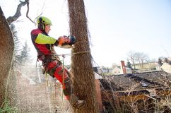 Arborist man cutting a branches with chainsaw and throw on a ground. The worker with helmet working at height on the trees. Lumber. Jack working with chainsaw Stock Images