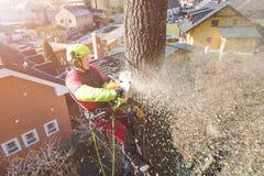 Arborist mens snijden takken met kettingzaag en werpt op een grond De arbeider met helm die bij hoogte aan de bomen werken timmer royalty-vrije stock afbeelding