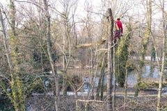 Arborist mens snijden takken van boom en werpt op een grond Boom en aardconcept Stock Afbeelding
