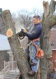 Arborist op het werk Royalty-vrije Stock Foto