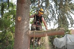 Arborist på arbete arkivbilder