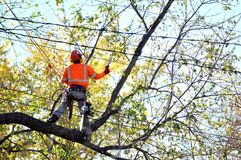 Arborist pruning tree branches . Man in orange work wear cutting tree branches over the wires on the height. Part of a series Stock Photos