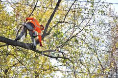 Arborist pruning tree branches . Stock Image