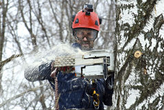 Arborist sawing wood chainsaw at the height Stock Images