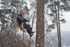 Arborist sawing wood chainsaw at the height in a snowstorm Stock Images