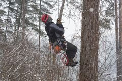 Arborist sawing wood chainsaw at the height in a snowstorm. Dangerous work Stock Image