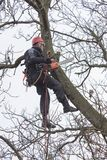 Arborist sawing wood chainsaw at the height Stock Photos