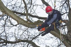 Arborist sawing wood chainsaw at the height Royalty Free Stock Photos