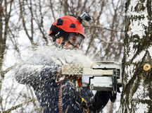 Arborist saws birch chainsaw Royalty Free Stock Photo