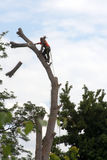 Arborist sequence - tree cutting. An arborist sequence of cutting a tree limb Stock Photography