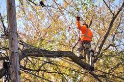 Arborist som beskär trädfilialer Fotografering för Bildbyråer