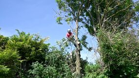 Felling branches of a tall tree