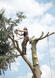 Arborist upptill av ett träd royaltyfria bilder