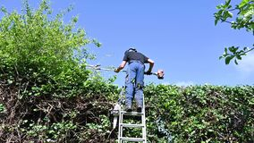 Arborist using a hedge trimmer.